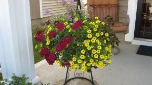 Catherine's hanging basket